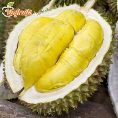 Sầu riêng Ri6 nổi tiếng khắp ĐBSCL - Vinfruits