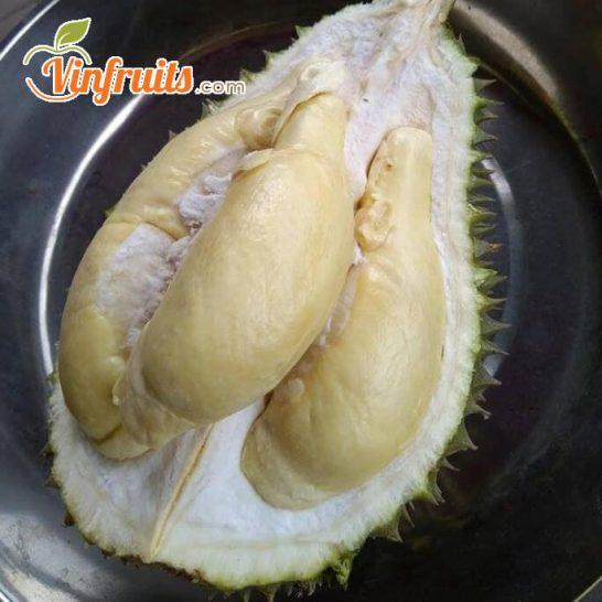 Cơm nhiều, hạt lép, mùi thơm đậm là đặc điểm của sầu riêng Chuồng Bò - Vinfruits