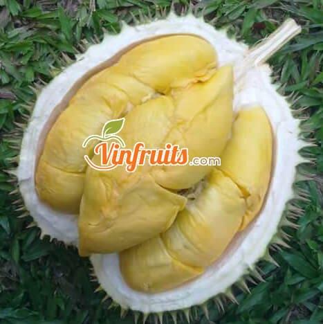 Sầu riêng Ri6 cơm màu vàng đậm, múi nhỏ hơn - Vifruits