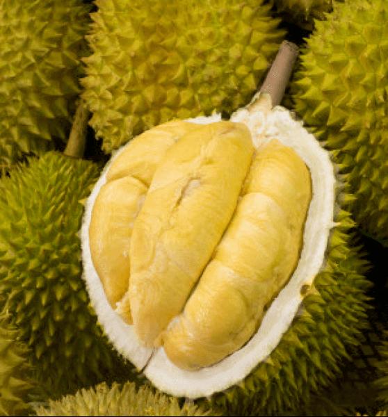 Sầu riêng Ri6 cơm màu vàng đậm, múi nhỏ hơn. - Vinfruits