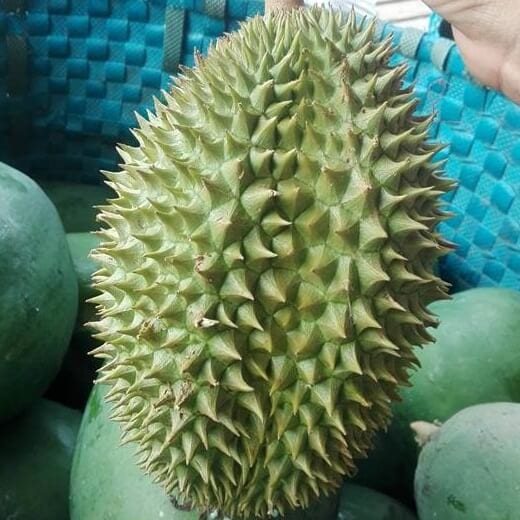 Sầu riêng Khổ Qua - Vinfruits