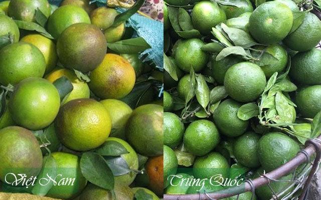 Cam vỏ xanh Việt Nam (trái) và cam Trung Quốc (phải) - Vinfruits