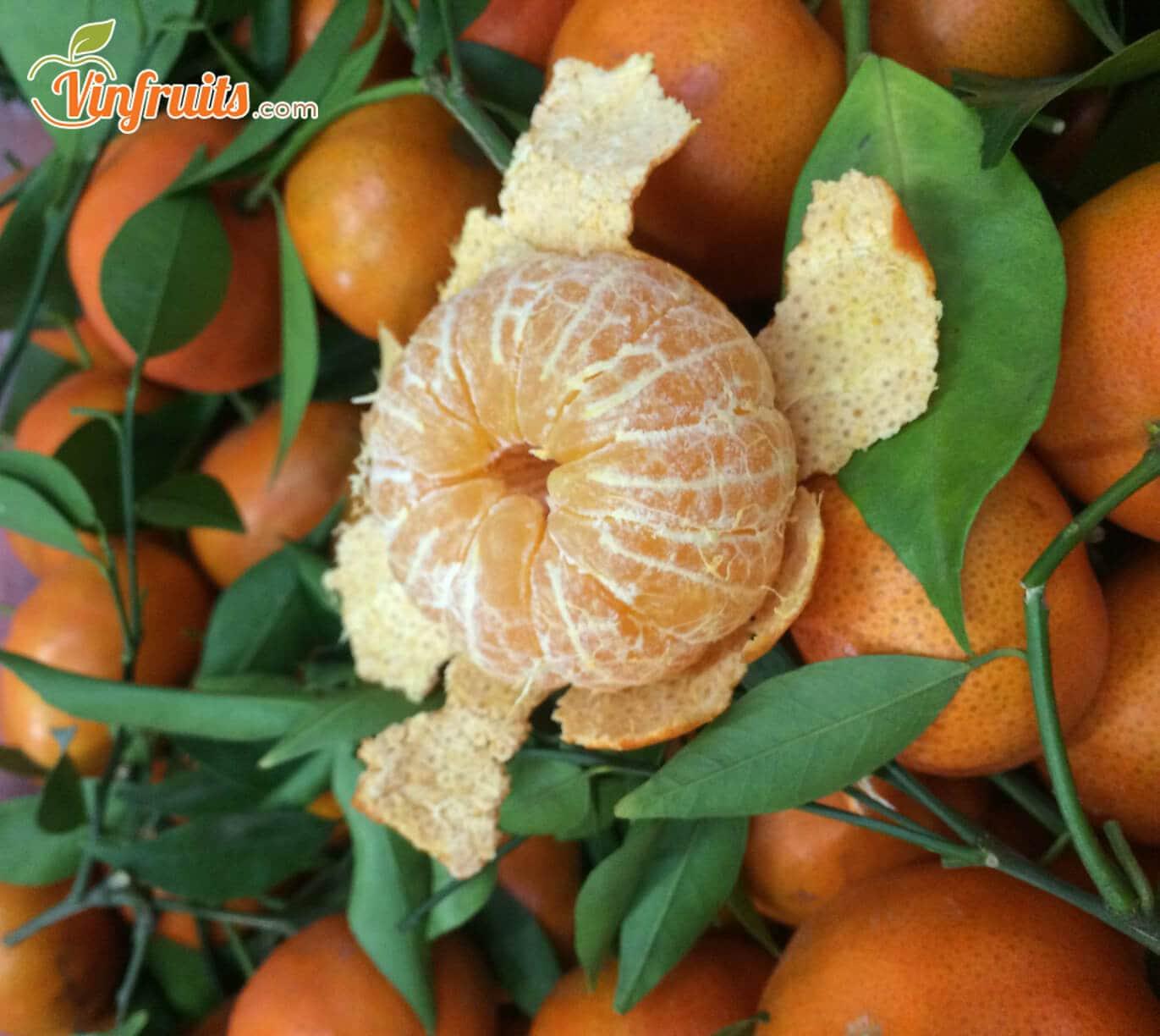 Cam canh trái nhỏ, mỏng vỏ, thơm ngon - Vinfruits
