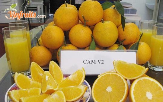 Cam Cap Phong V2 - Vinfruits