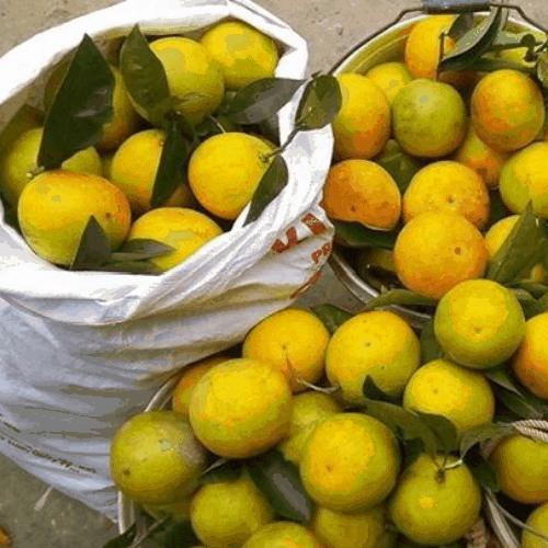 Cam Cao Phong đặc sản Hòa Bình - Vinfruits