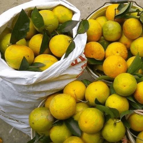 Cam Cao Phong - Vinfruits