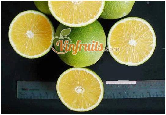 Cam Mật miền Tây - Vinfruits