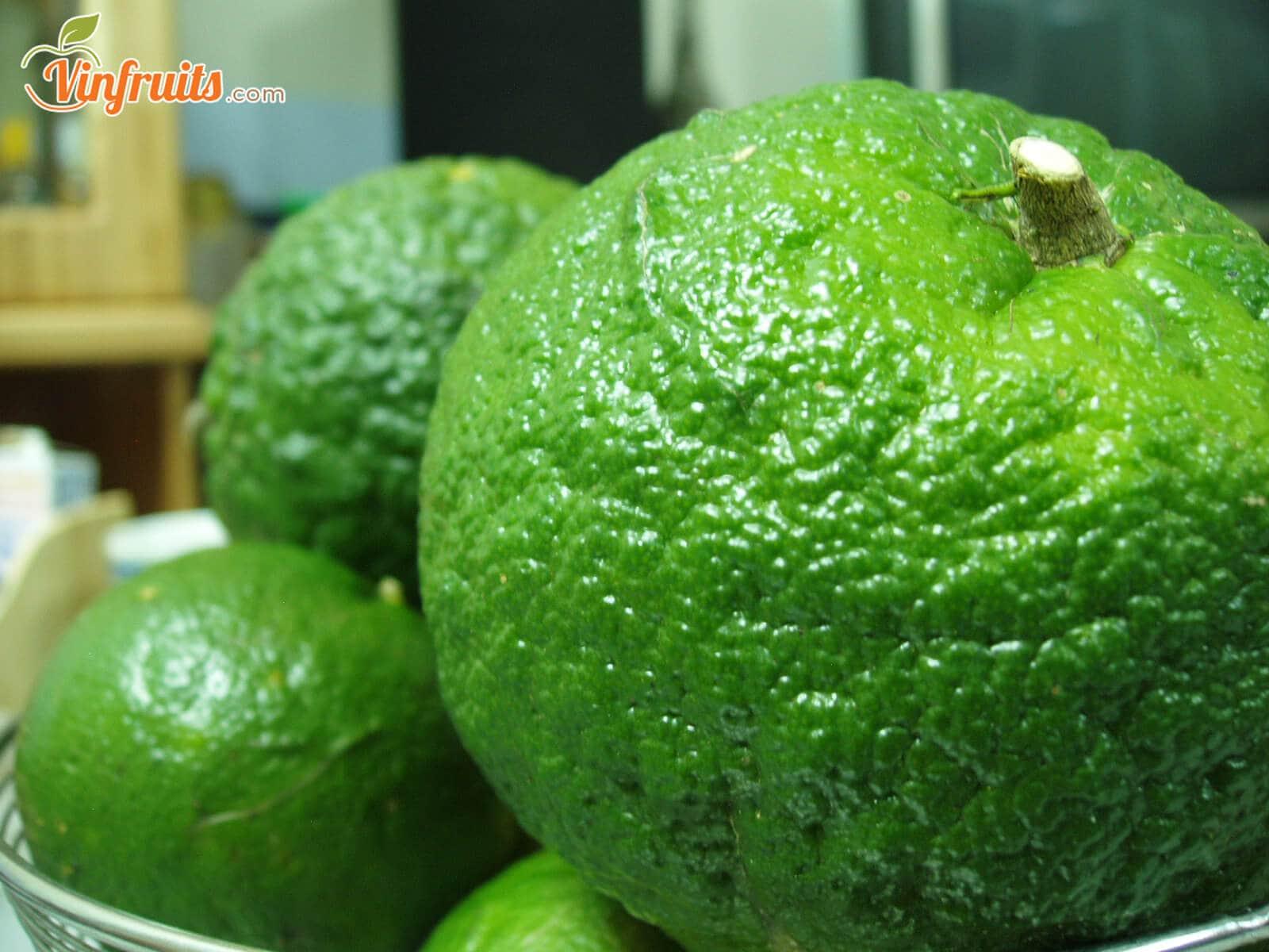 Giá cam sành thường ít biến động - Vinfruits