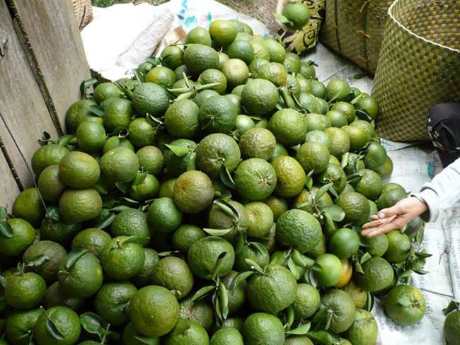 Cam sành Bố Hạ - Vinfruits