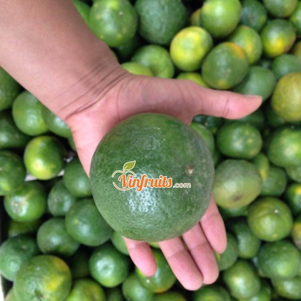 Cam sành Bố Hạ - Bắc Giang - Vinfruits