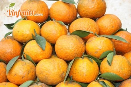 So sánh và phân biệt cam sành Bắc Quang & cam Trung Quốc - Vinfruits