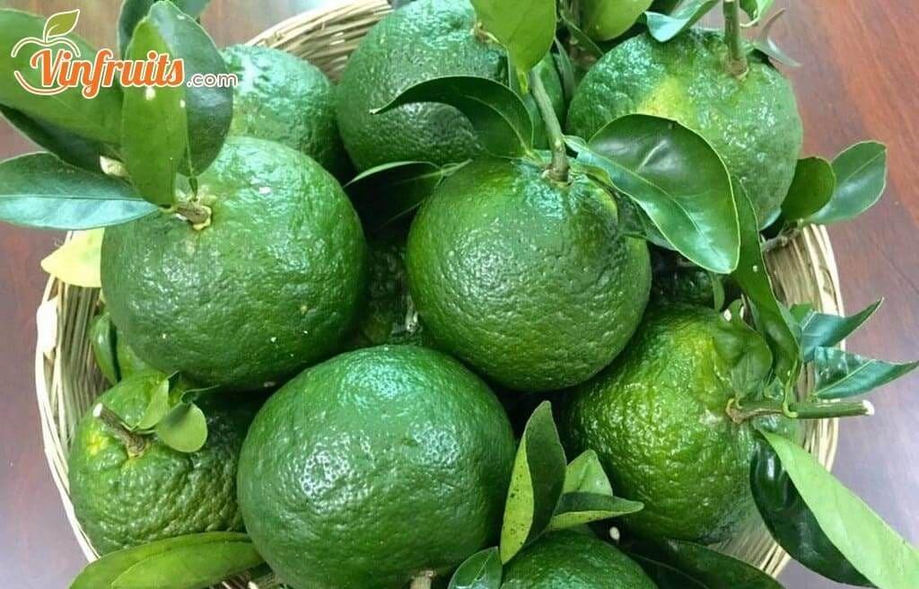 Cam sành Bến Tre - Vinfruits