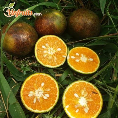 Cam sành đen thơm ngon - Vinfruits