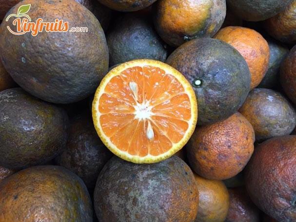 Cam sành đen hữu cơ - Vinfruits