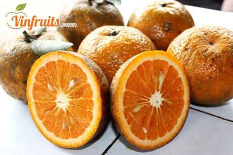 Cam sành Hàm Yên - Vinfruits