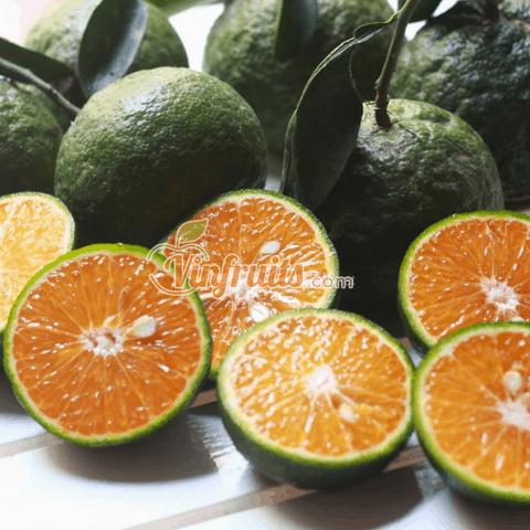 Cam sành Bắc Tân Uyên - Bình Dương - Vinfruits