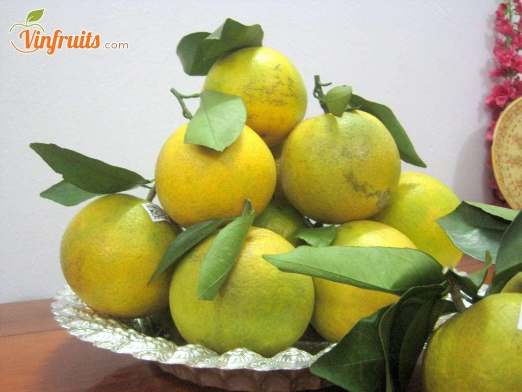 Cam Vinh có màu vàng ngả xanh - Vinfruits