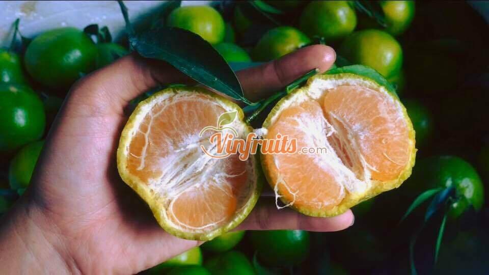 Quýt đường không hạt Lai Vung - Vinfruits