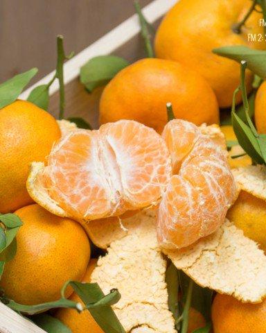 Quýt hồng mỏng vỏ, ít hạt - Vinfruits