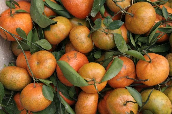 Trái quýt hồng tươi ngon - Vinfruits