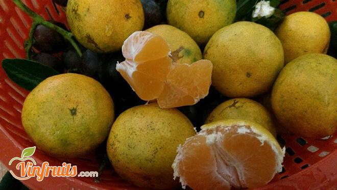 Quýt đường Lai Vung thơm ngọt - Vinfruits