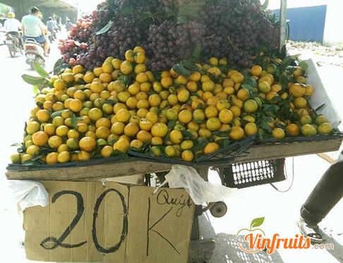 Quýt đường Trung Quốc có bề ngoài khá giống quýt Lai Vung - Vinfruits