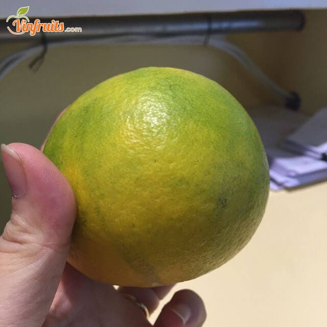 Cam khe mây trái nhỏ, vỏ xanh ngả vàng - Vinfruits