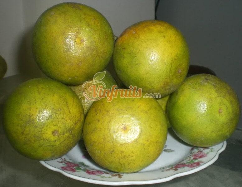 Hai mặt của cam xoàn đều có lõm đồng xu rất dễ nhận biết - Vinfruits