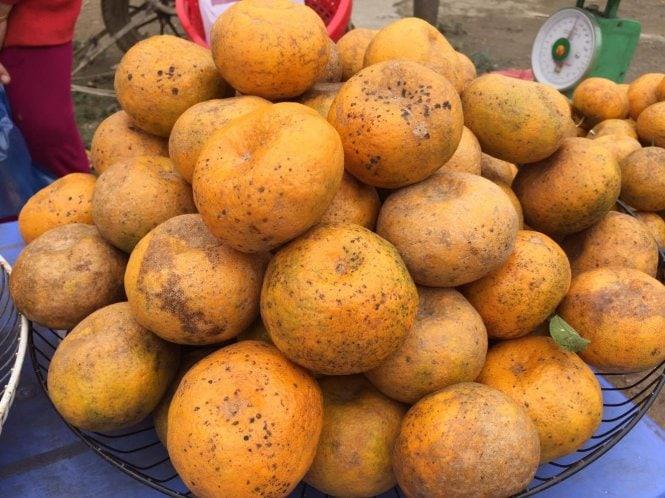 Vẻ ngoài quýt Bắc Cạn không được đẹp mắt nhưng chất lượng thơm ngon - Vinfruits