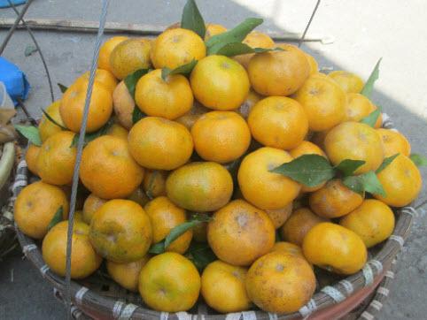 Quýt Bắc Sơn có quả tròn và quả dẹt - Vinfruits