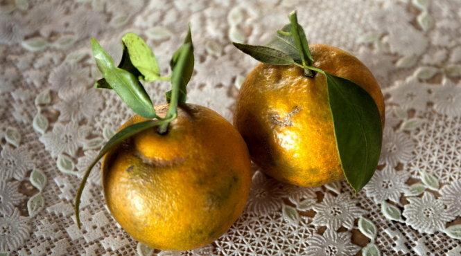 Quýt chum trai tròn và có đầu hình giống cái chum - Vinfruits
