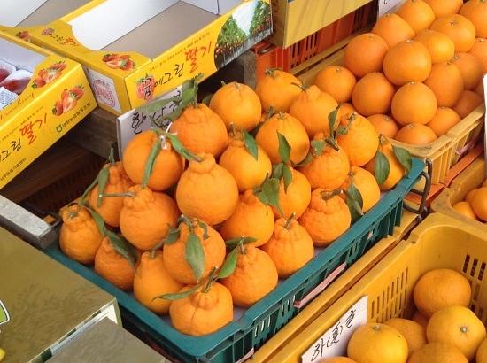 Quýt Chum Hà Giang giống Nhật - Vinfruits